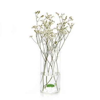 alvi Vaso Atlantis Colore verde Vaso cilindrico con all'interno una tartaruga di vetro Vaso decorati